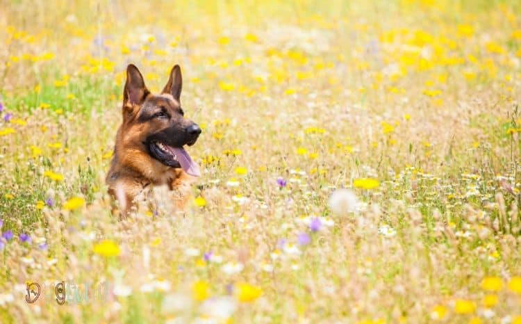 Natural-Dog-Sunscreen-Perfect-Featured-Image
