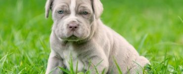 Why Do Female Puppies Hump Featured Image