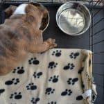 bulldog crate featured image