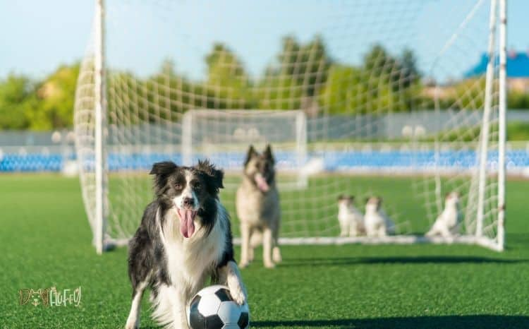 games-for-dogs-app-
