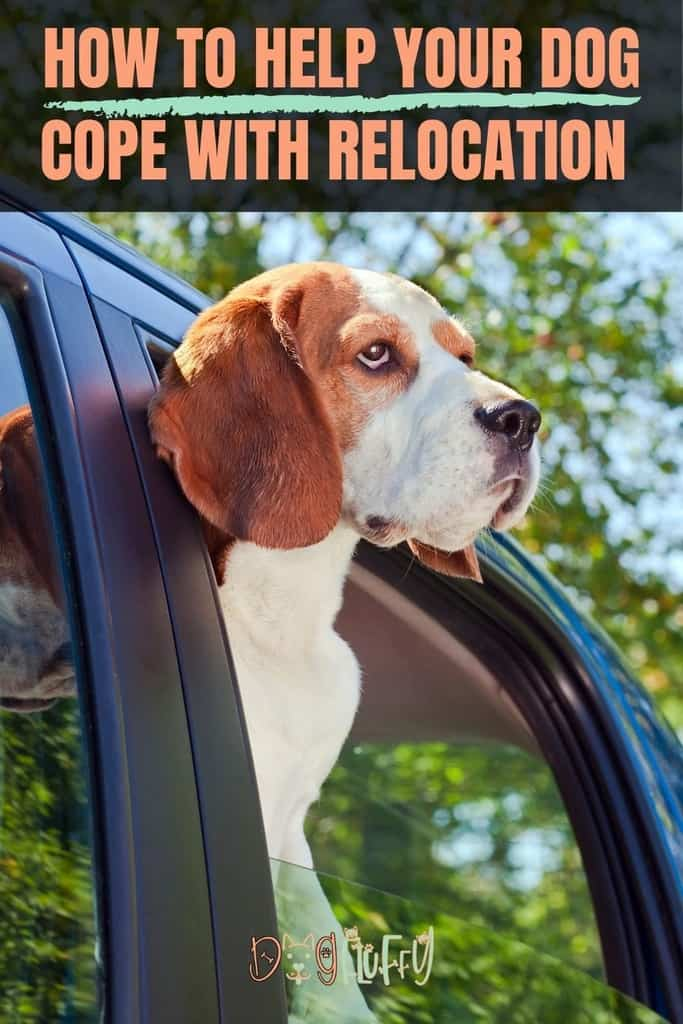 How To Help Your Dog Cope With Relocation pin