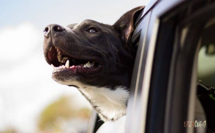 Dog Cope With Relocation Featured image