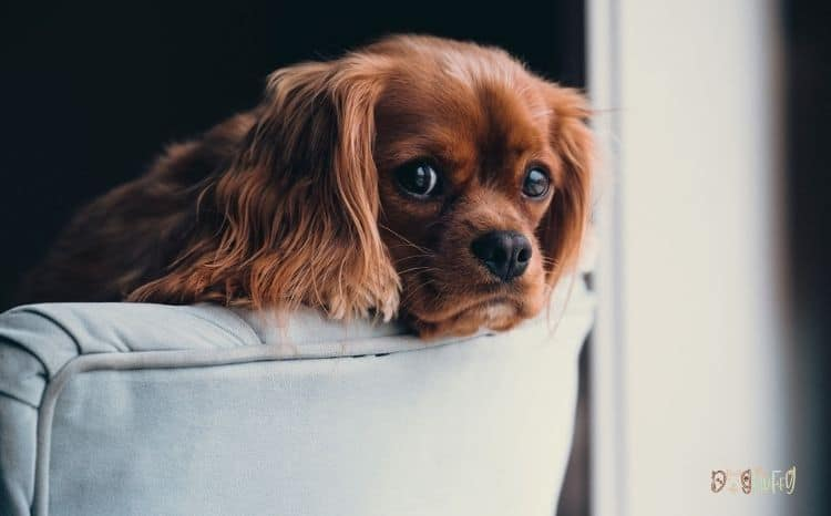 Dog Cope With Relocation internal image
