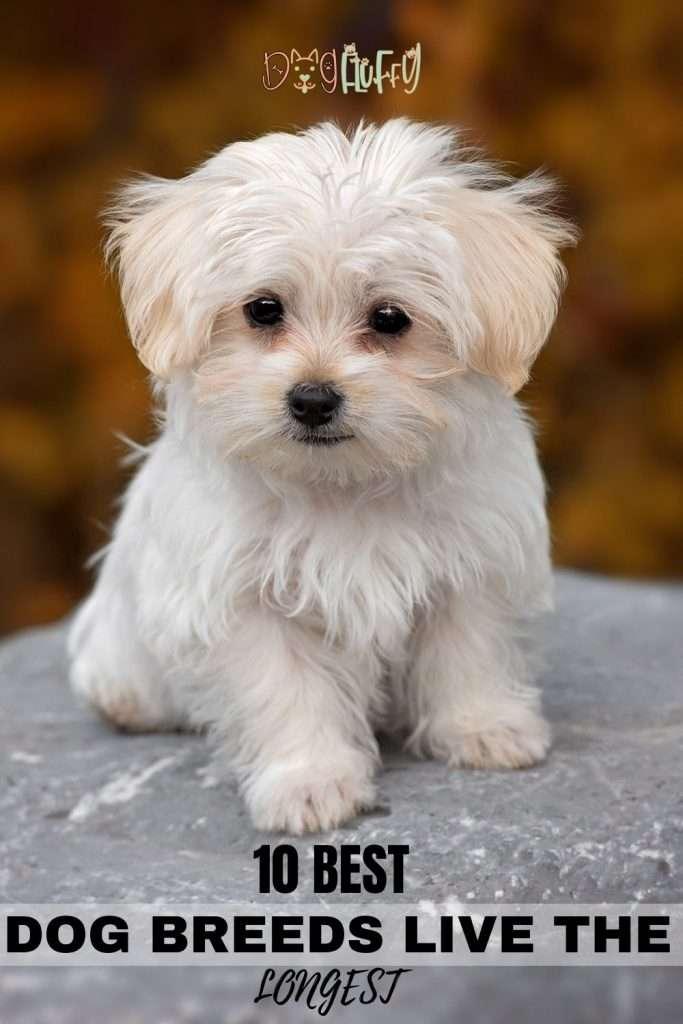 Dog Breeds Live The Longest min