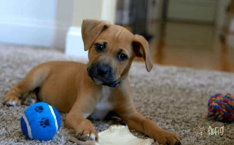 Demonstrate the Durability, Strength, and Safety Features of Your Dog Toys