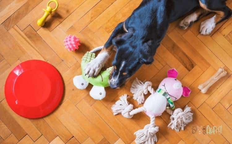 Dog Toys - Dog Products