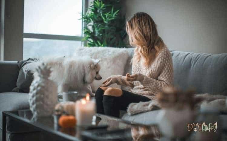 Dog Wellness Items - Dog Products