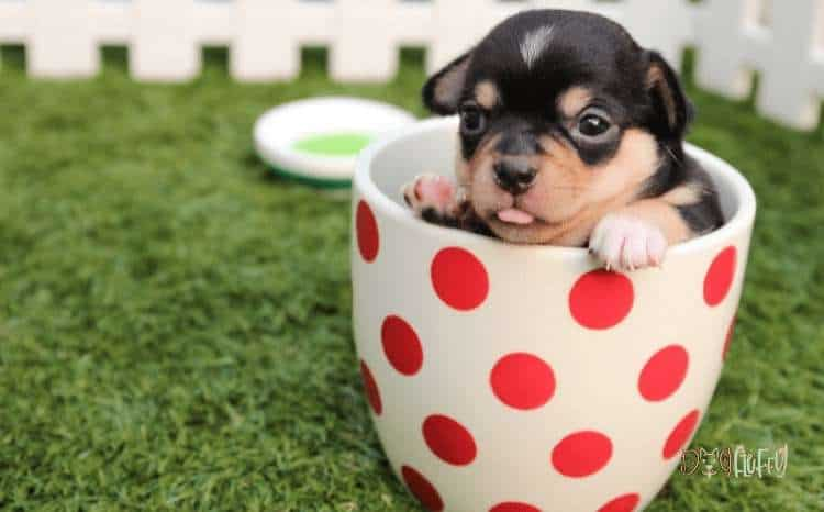 Establish Your Business as a Brand That Truly Cares for Animal Companions