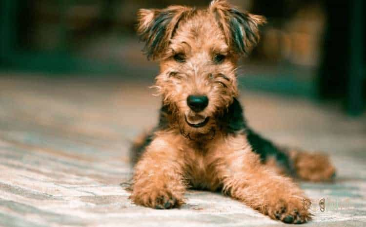 What Homemade Dog Food Should Have For Good Health