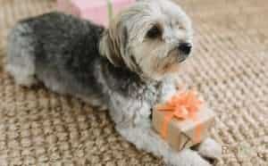 Best 50 Gift Ideas for Dog Lovers