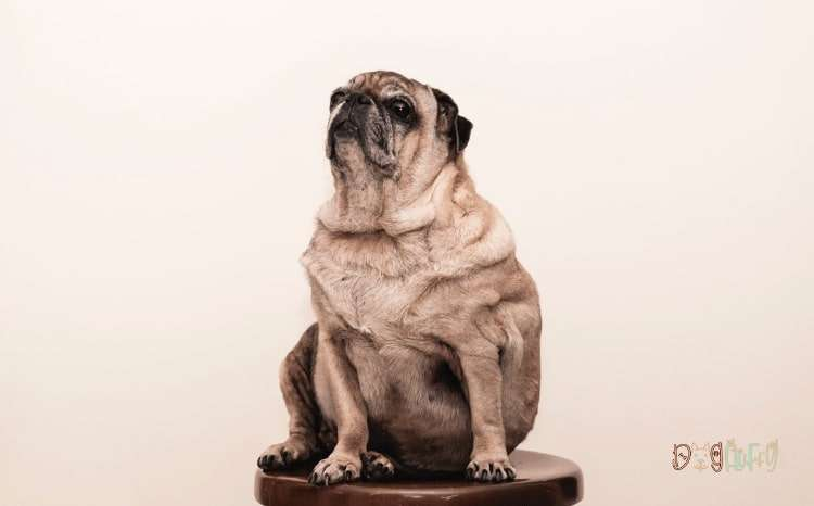 Dog Food For Weight Loss