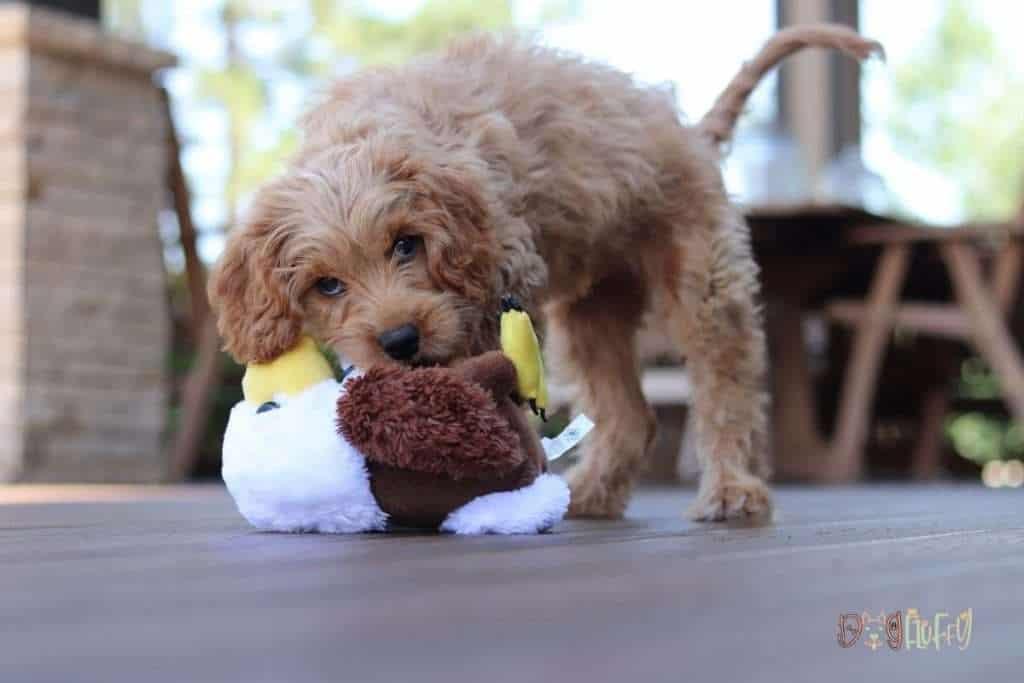 Feed your dog good food to keep him healthy - Dog Fluffy