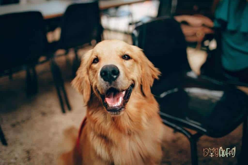 It's a great time to be a dog owner - dog fluffy