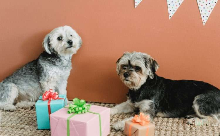 Looking for Some Great Gift Ideas for Dog Lovers