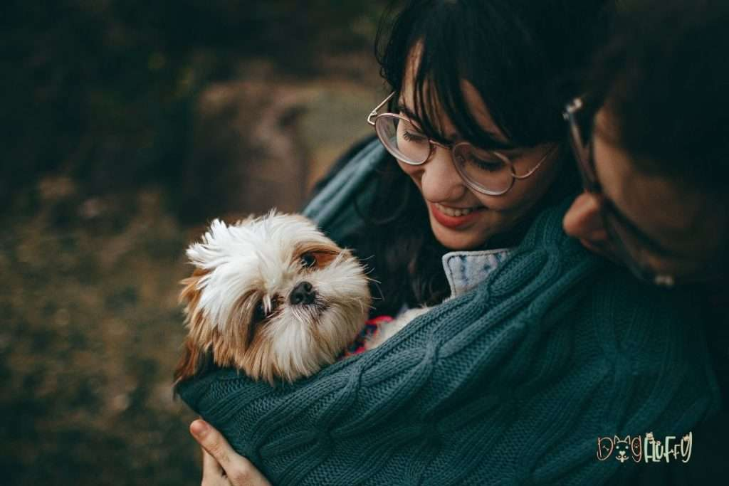 What Causes Tear Stains In Dogs - Dog Fluffy