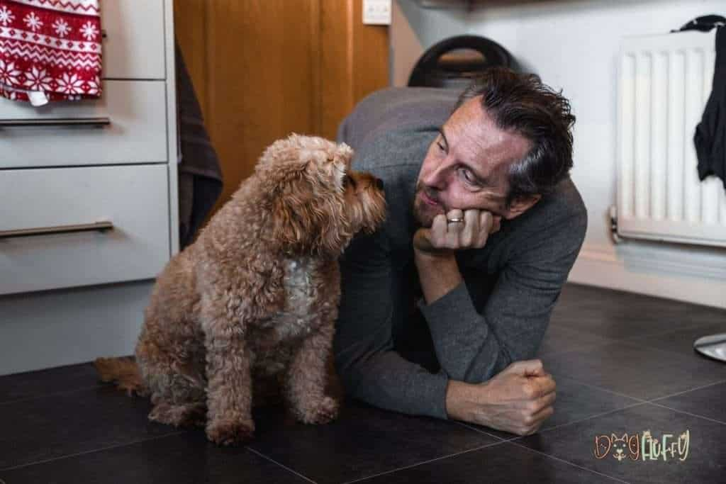 What to Avoid in Your Cavapoo's Food - Dog Fluffy